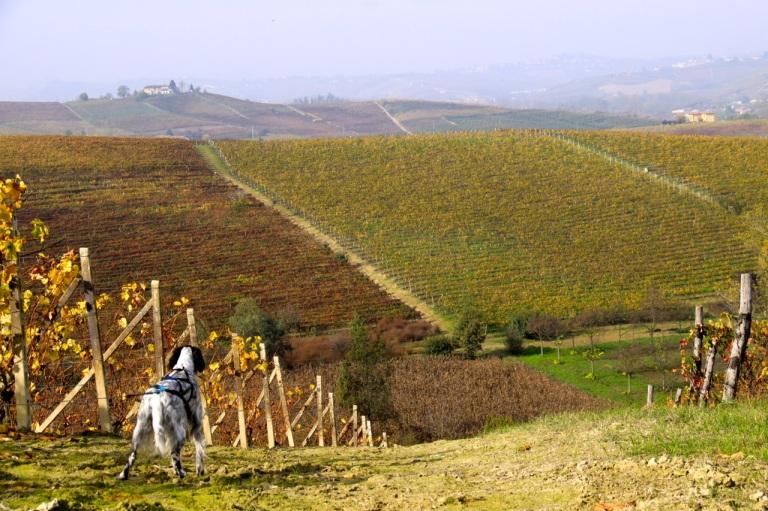 20131109Mia i vinmarken