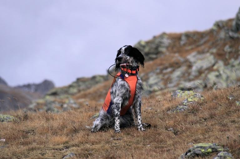 GPShunden