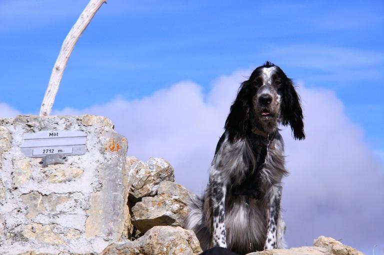 Tophunden